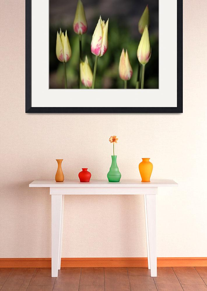 """""""Tulips&quot  by thegardenpathphotography"""