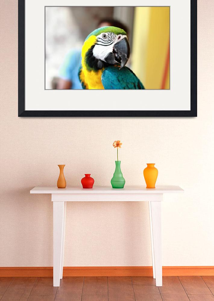 """""""Parrot&quot  (2015) by AlessioLucarini"""