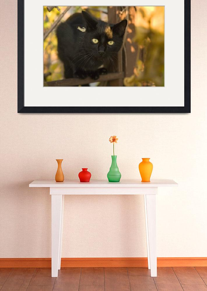 """""""Black cat in tree&quot  by IanMiddletonphotography"""