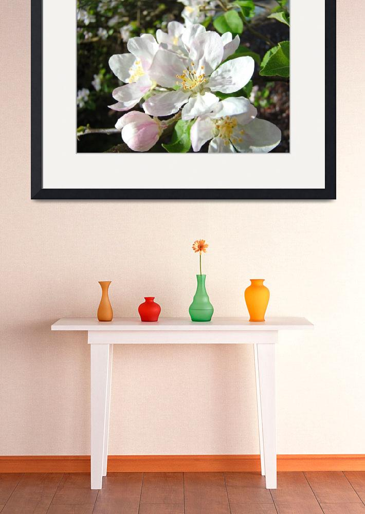 """""""Apple Blossoms Flowers Art Prints Spring Floral""""  (2014) by BasleeTroutman"""