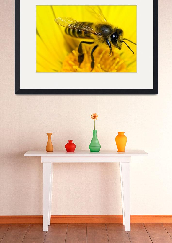 """""""Bee""""  by hobson"""