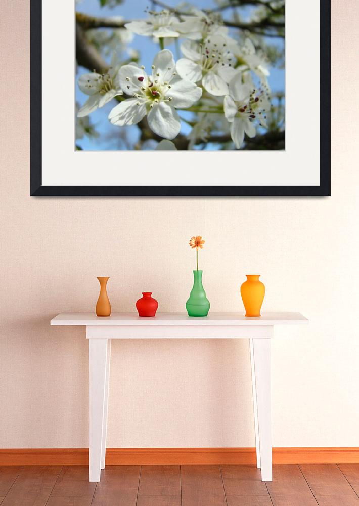 """BLOSSOMS 26 White Tree Blossoms Art & Cards""  (2009) by BasleeTroutman"
