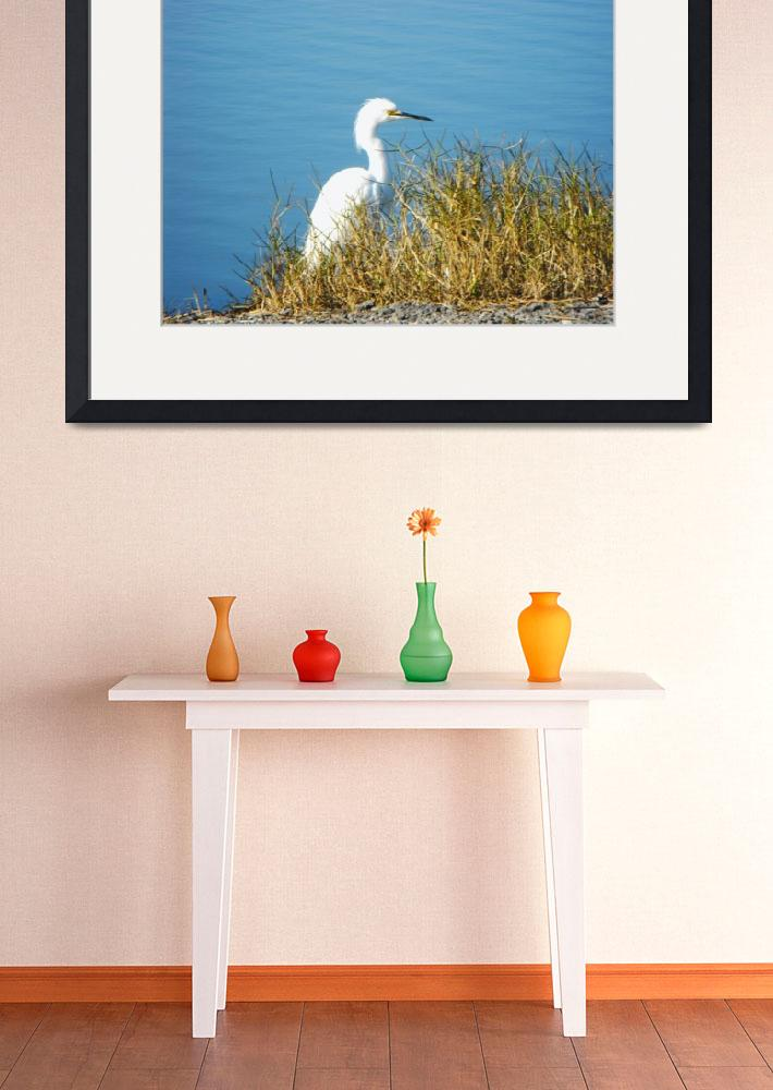"""""""great egret""""  (2008) by Roberth"""