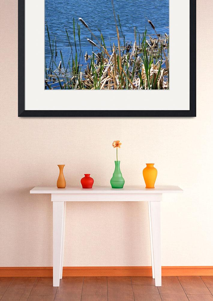 """""""Cat Tails 1399""""  (2010) by rayjacque"""