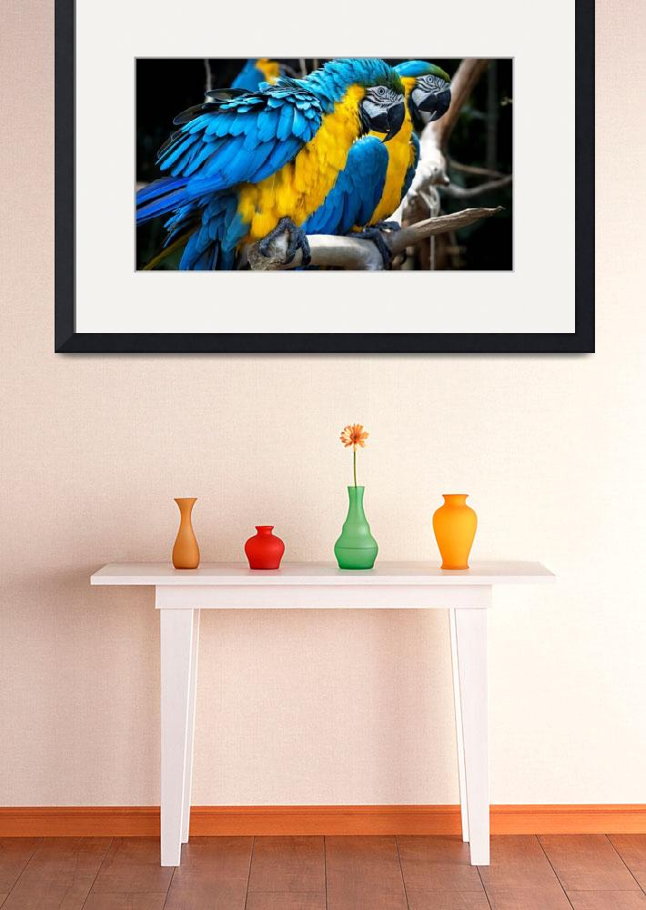 """""""Blue and Yellow Parrots&quot  (2016) by AnswersFound"""