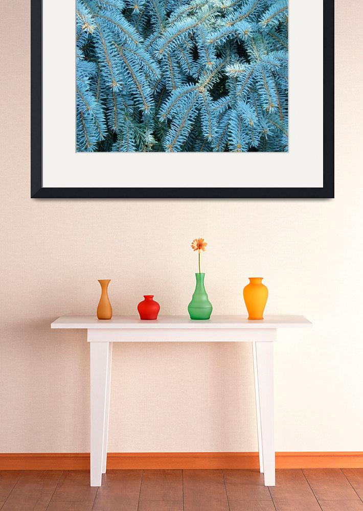 """Blue Spruce Conifer Tree branches Art prints&quot  (2014) by BasleeTroutman"