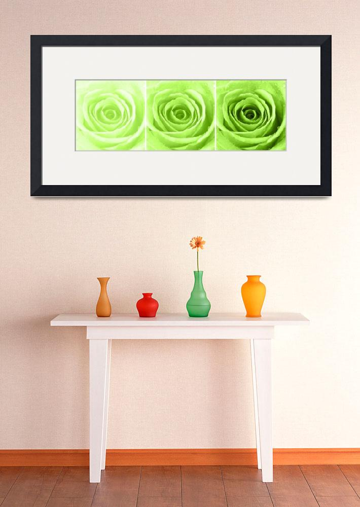 """""""Lime Green Rose with Water Droplets Triptych""""  (2012) by NatalieKinnear"""