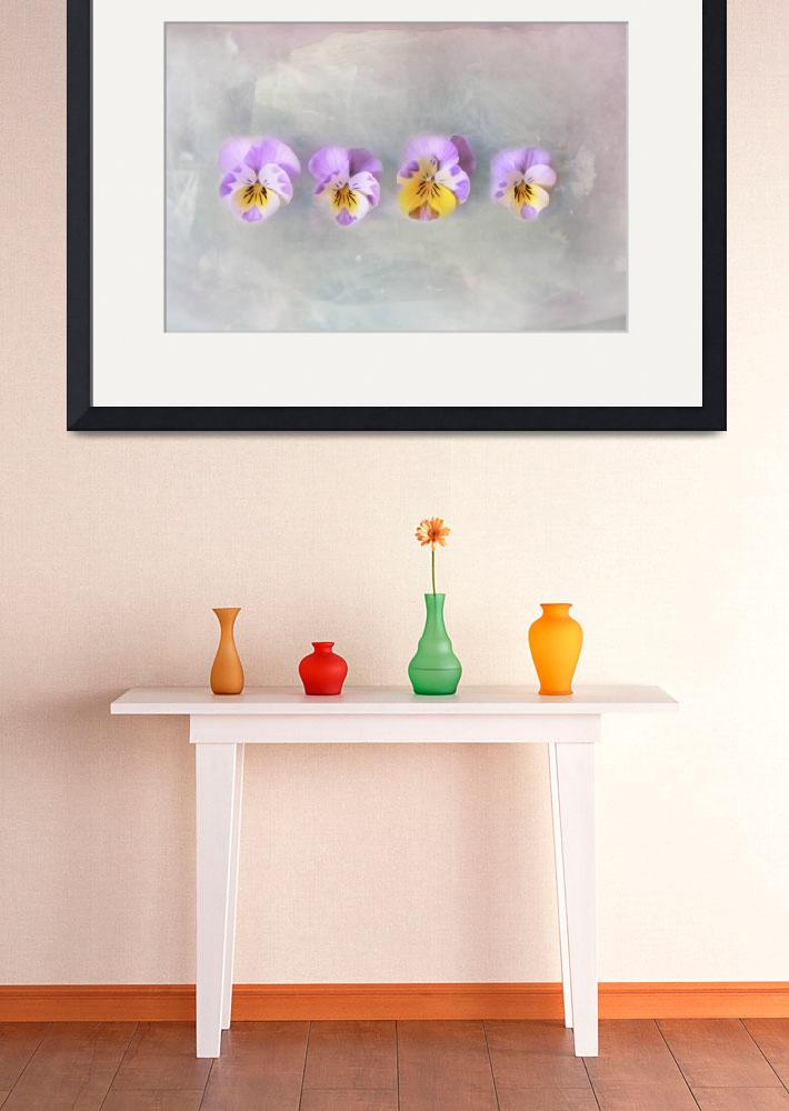 """""""Vintage Pansies&quot  by SYoungPhotography"""