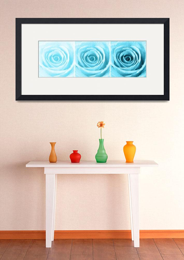 """""""Turquoise Rose with Water Droplets Triptych&quot  (2012) by NatalieKinnear"""