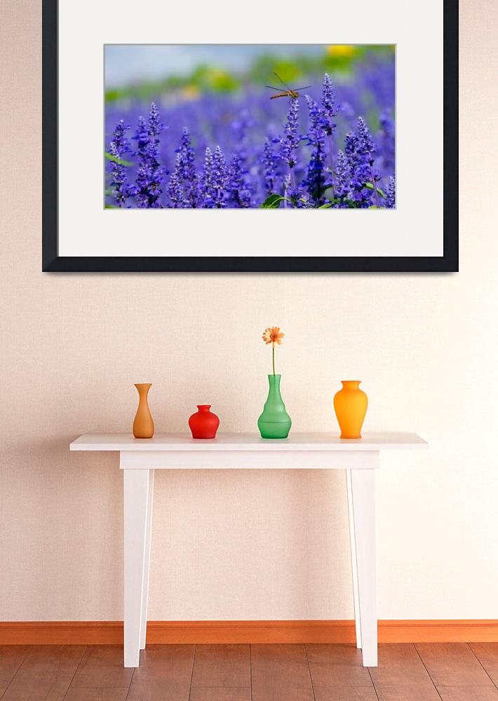 """""""Florenz Collection Framed Print&quot  by buddakats1"""