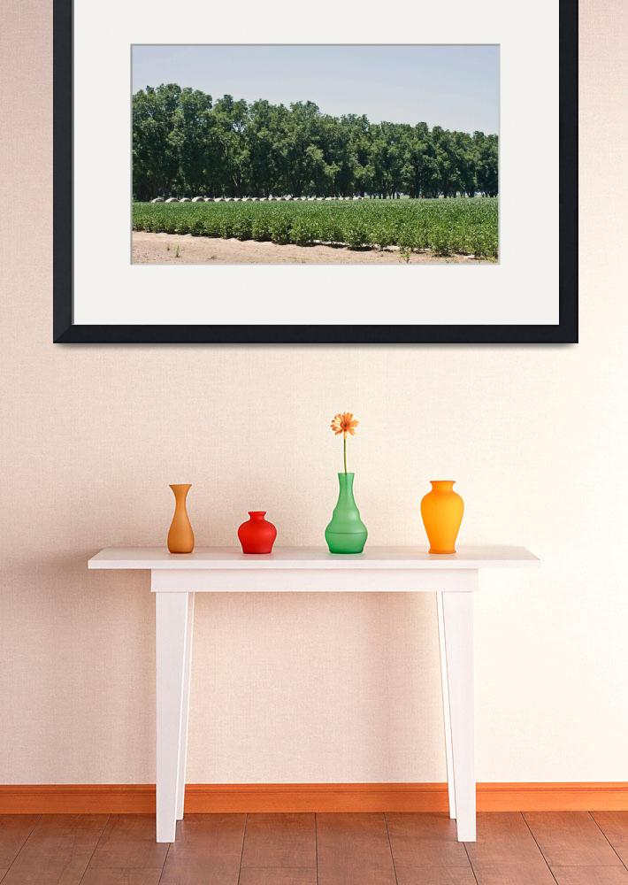 """""""Keo Pecan Orchard, Hay and Soybean Field""""  (2014) by picturesbybgale"""