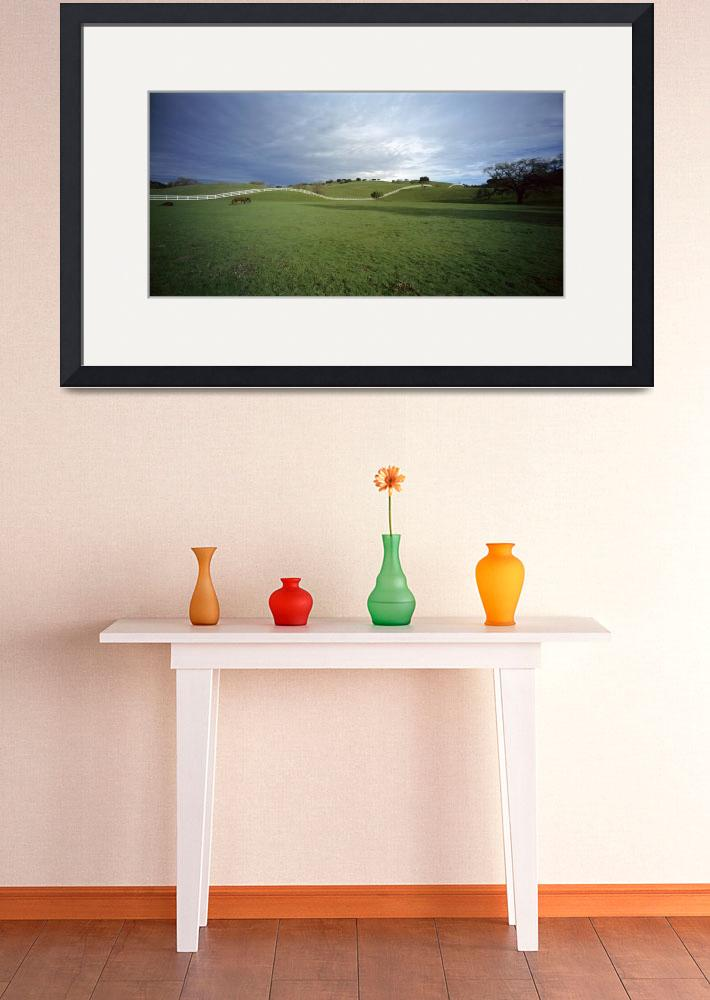 """""""Horses grazing in a field&quot  by Panoramic_Images"""