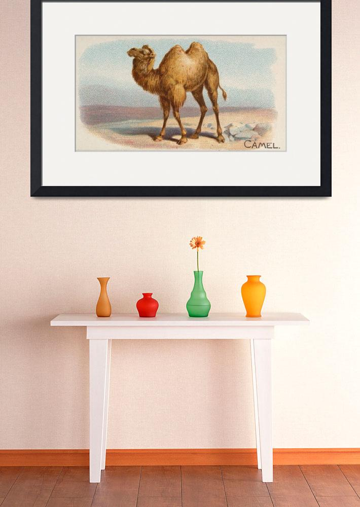 """Vintage Illustration of a Camel (1890)""  by Alleycatshirts"