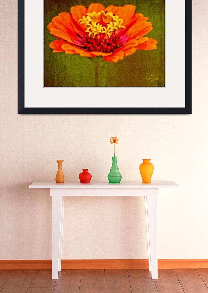 """""""Orange and Yellow Zinnia Flower Picture&quot  (2013) by PhotographsByCarolFAustin"""