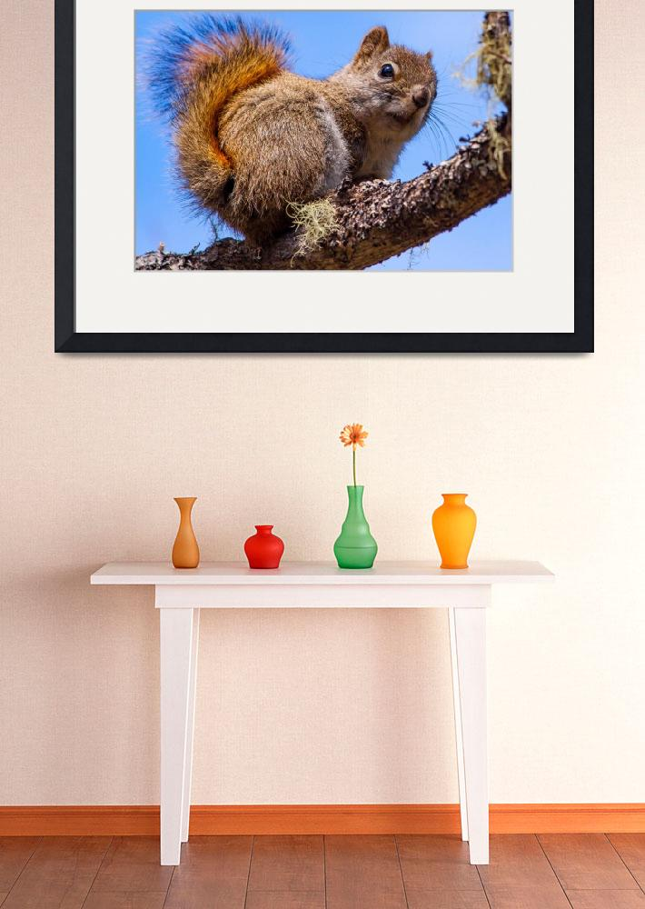 """""""squirrel&quot  (2016) by Ralli"""