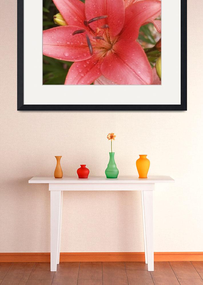 """""""Raindrops upon a Pink Lily bloom&quot  (2012) by MikeMBurkeDesigns"""