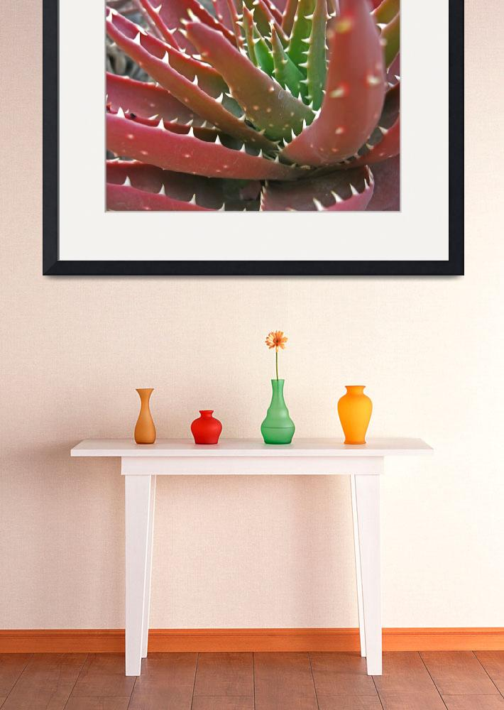 """""""Red-Green Aloe 2&quot  (2009) by ChristopherInMexico"""