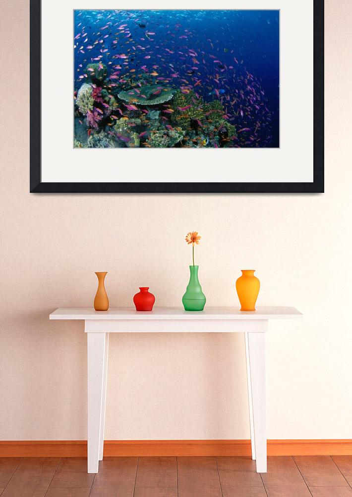 """Fiji, Hard Coral Reef Scene With School Lyretail A&quot  by DesignPics"