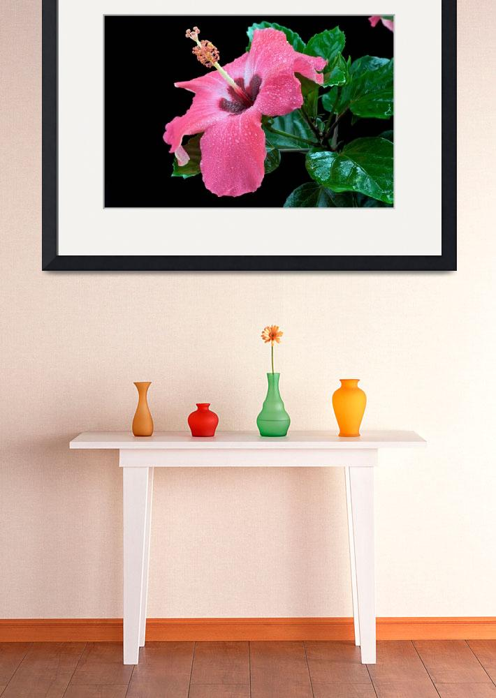 """""""Pink Hibiscus flower&quot  (2010) by ImageArt-Photography"""
