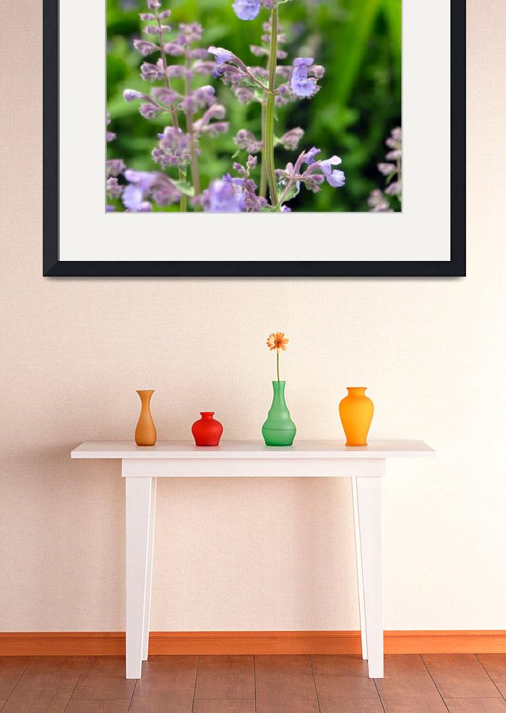 """""""Catmint""""  (2011) by LJdesigns"""