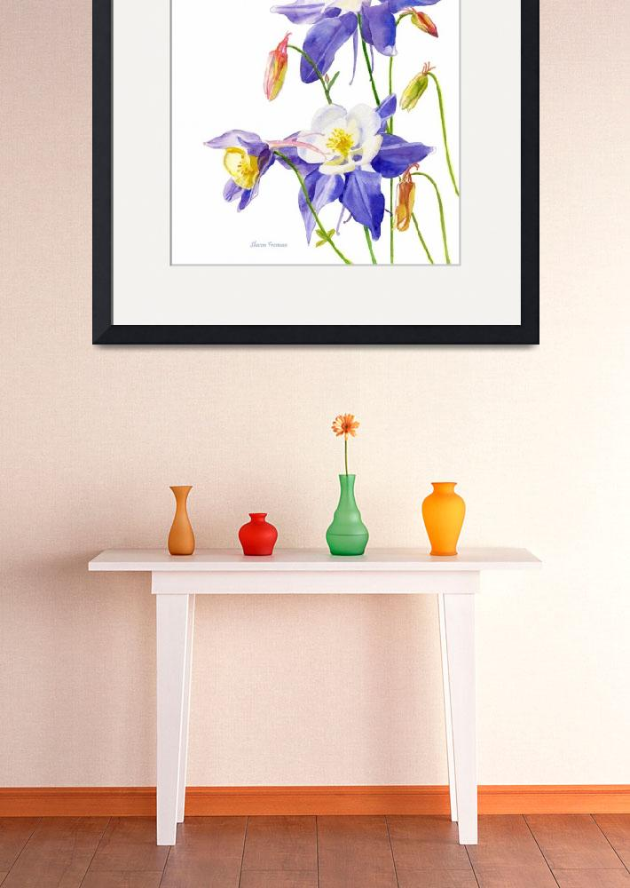 """Blue Columbine Flowers, white background&quot  (2010) by Pacific-NW-Watercolors"