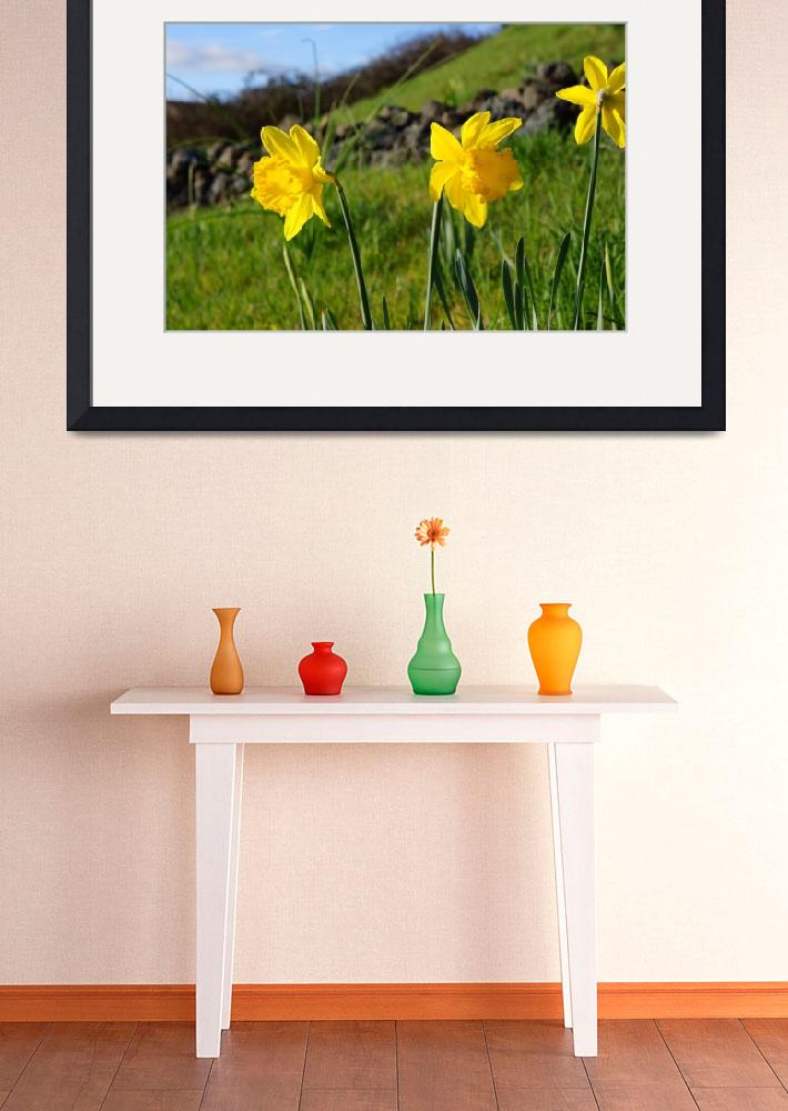"""""""Country Spring Hillside Meadow Daffodil Flowers""""  (2014) by BasleeTroutman"""