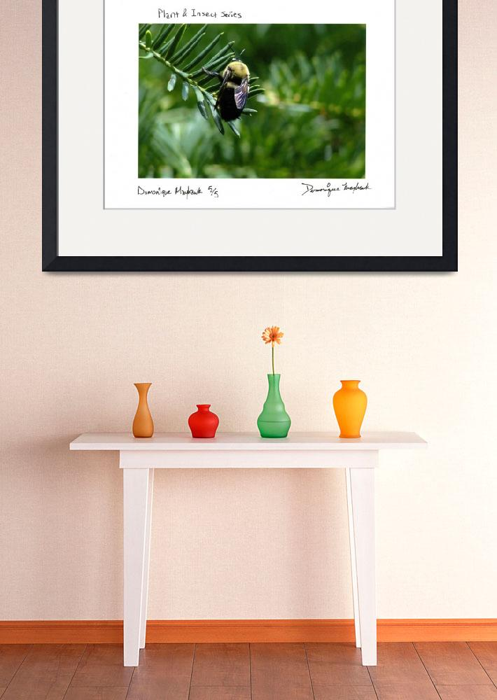 """""""Plant and Insect Series One&quot  by Nuanceart"""