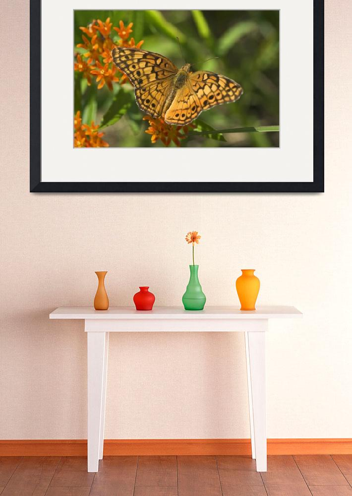 """Variegated Fritillary Butterfly--Zinfandel&quot  (2008) by tricia"