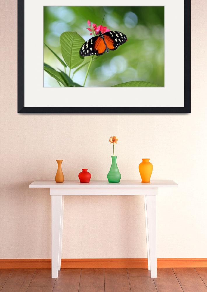 """""""Butterfly Hecale Longwing Tropical&quot  (2011) by KsWorldArt"""