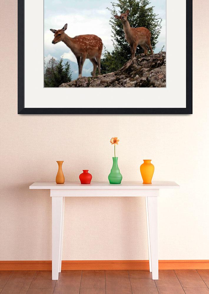 """young Deers at the Deerpark Goldau Switzerland&quot  (2010) by baechlergallery"
