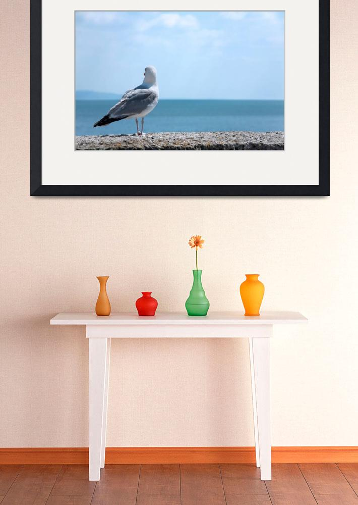 """""""Seagull Looking Out to Sea - Natalie Kinnear Photo&quot  (2009) by NatalieKinnear"""