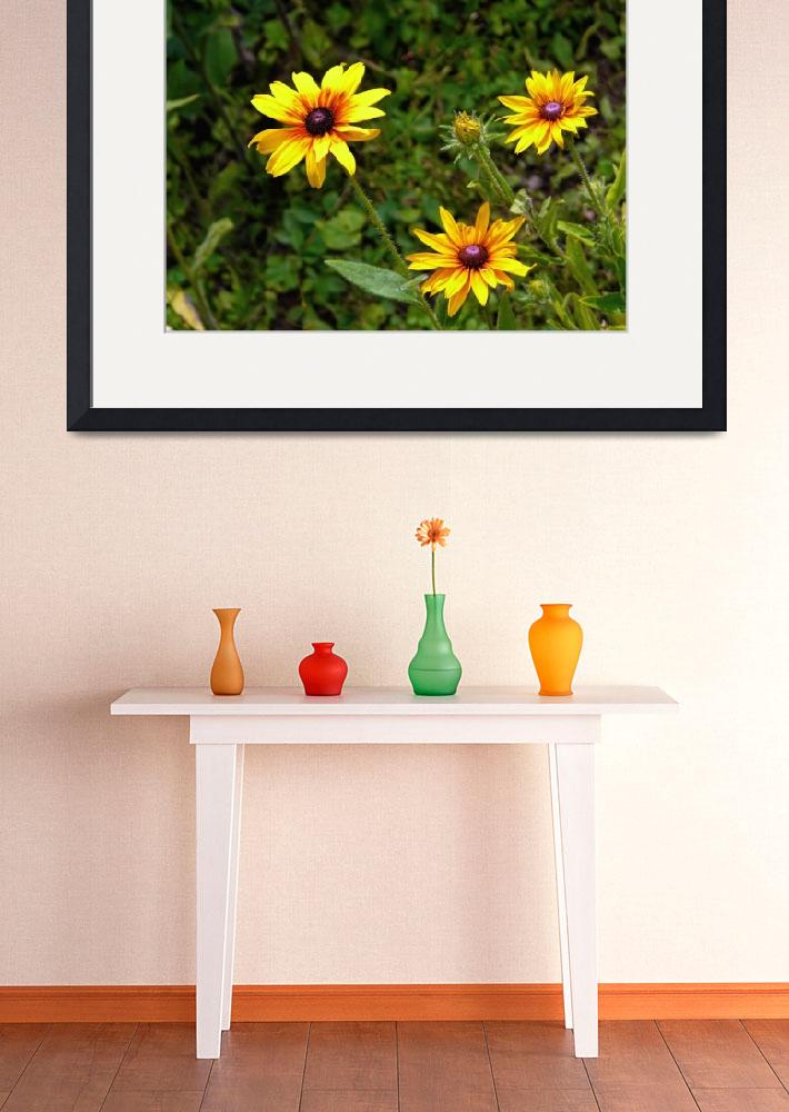 """Haselden Collection Framed Print&quot  by buddakats1"