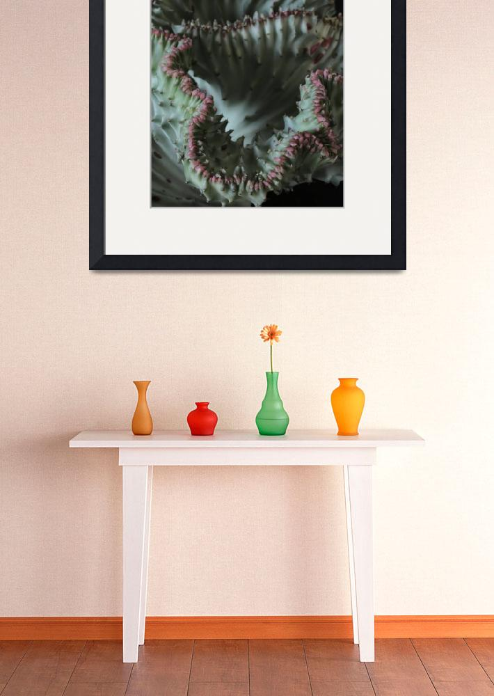 """""""Coral Cactus&quot  (2014) by newimage"""