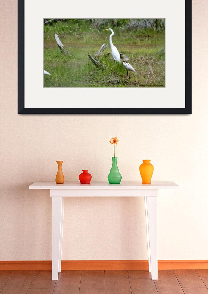 """""""Great Egret & White Ibis""""  (2013) by WildAboutNaturePhotography"""