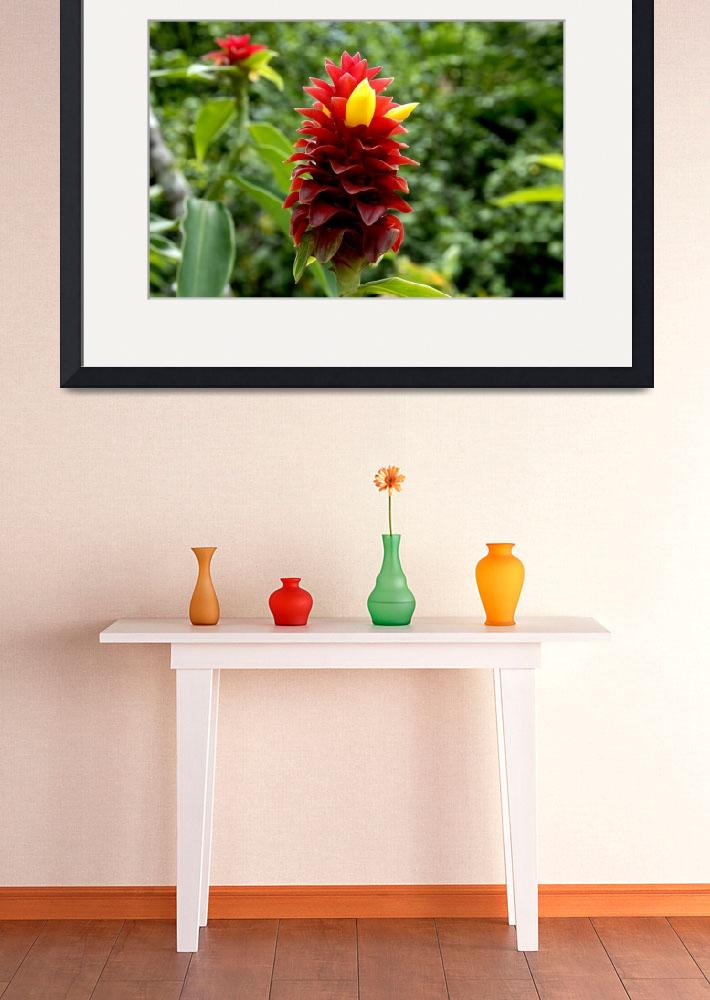"""""""Cayman Islands Plant Life : Red Tower Spiral Ginge&quot  by RonScott"""