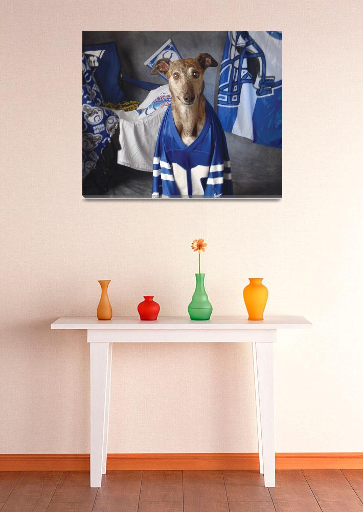 """""""Colts Fanatic""""  (2007) by GreyhoundDave"""