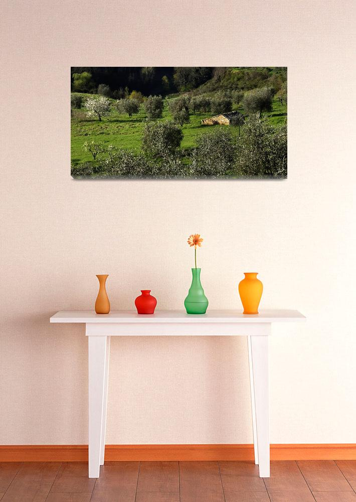 """""""Montisi Olive Grove&quot  (2006) by ErinKanoa"""