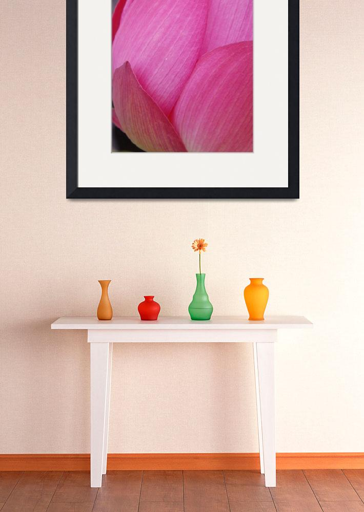 """""""pink lotus flower&quot  (2009) by nyc-naturephoto"""