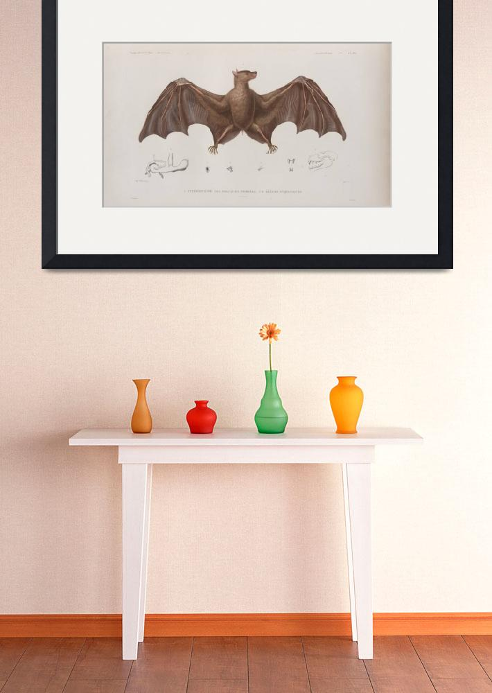 """Vintage Bat Illustration (1835)&quot  by Alleycatshirts"