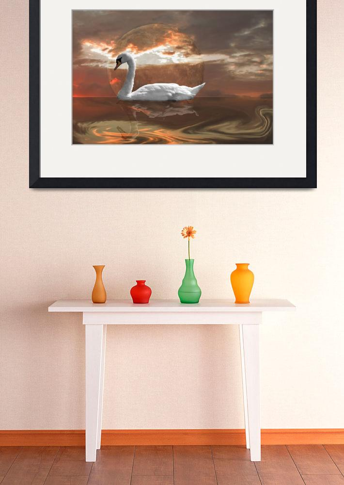 """""""Swan in the Evening&quot  (2015) by chris220252"""
