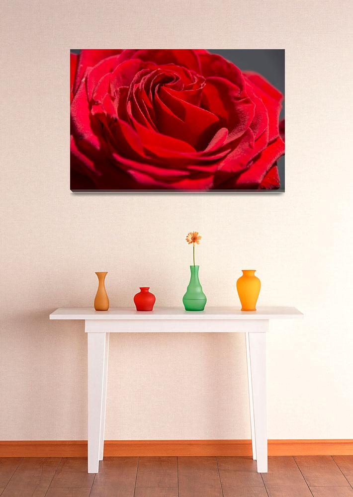 """Red Rose&quot  (2014) by Fraenks"