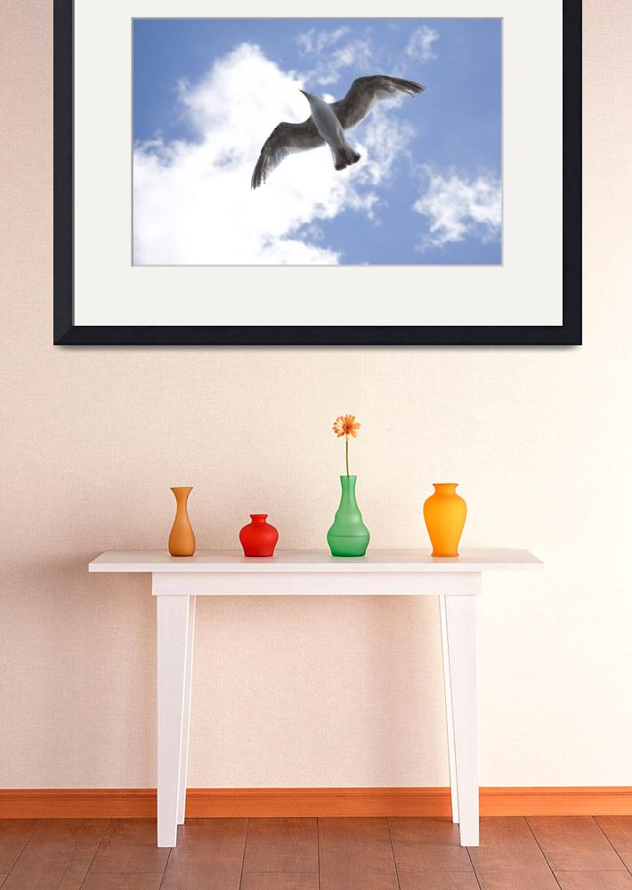"""""""Seagull in flight&quot  by IanMiddletonphotography"""