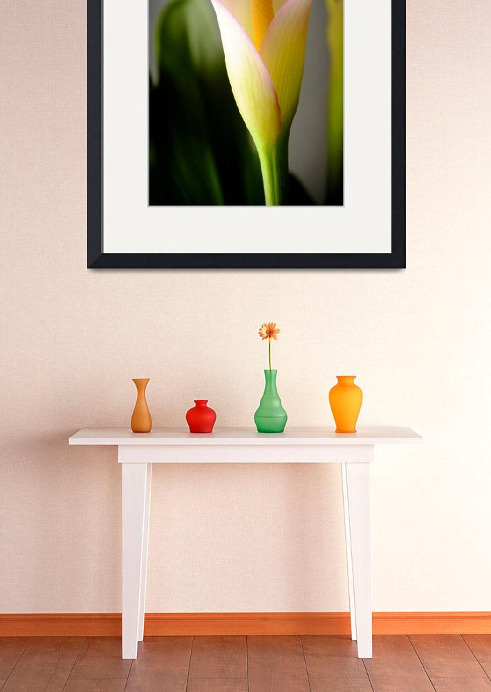"""""""Calla Lily 1&quot  (2012) by LauraD"""