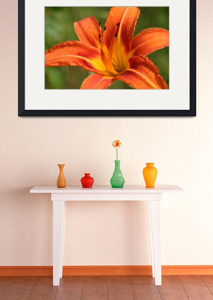 """""""Daylily""""  by SolacePointe"""