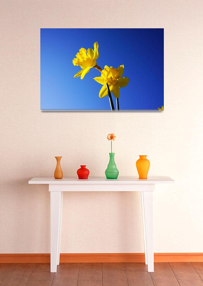 """Blue Skies Spring Floral Yellow Daffodils Flowers""  (2014) by BasleeTroutman"