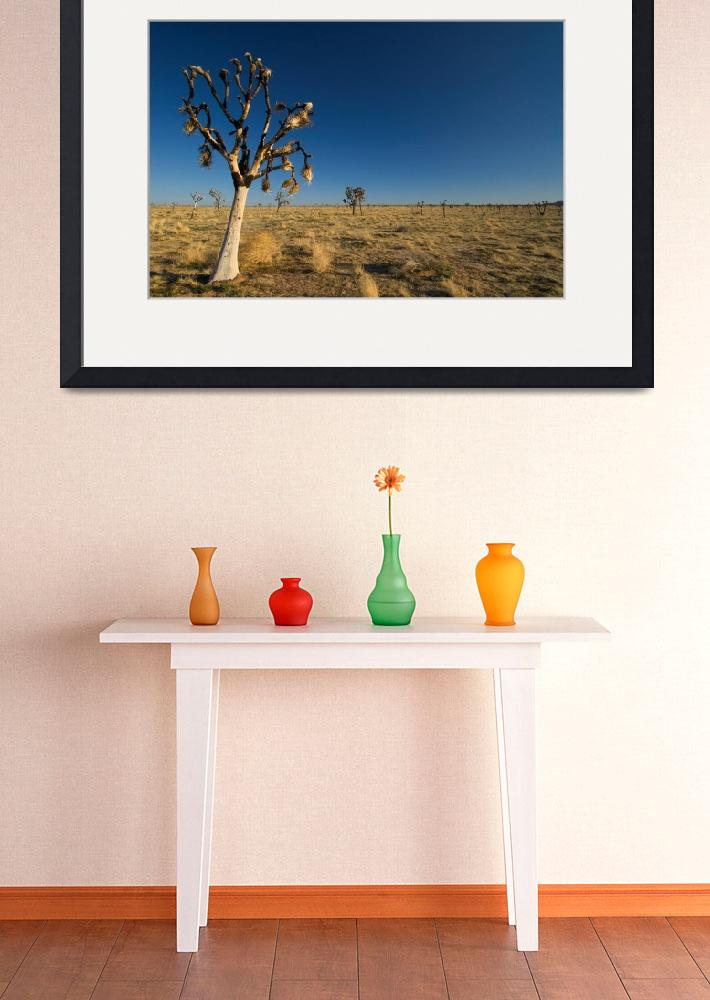 """The Lone Joshua Tree""  (2009) by GHPhotographic"