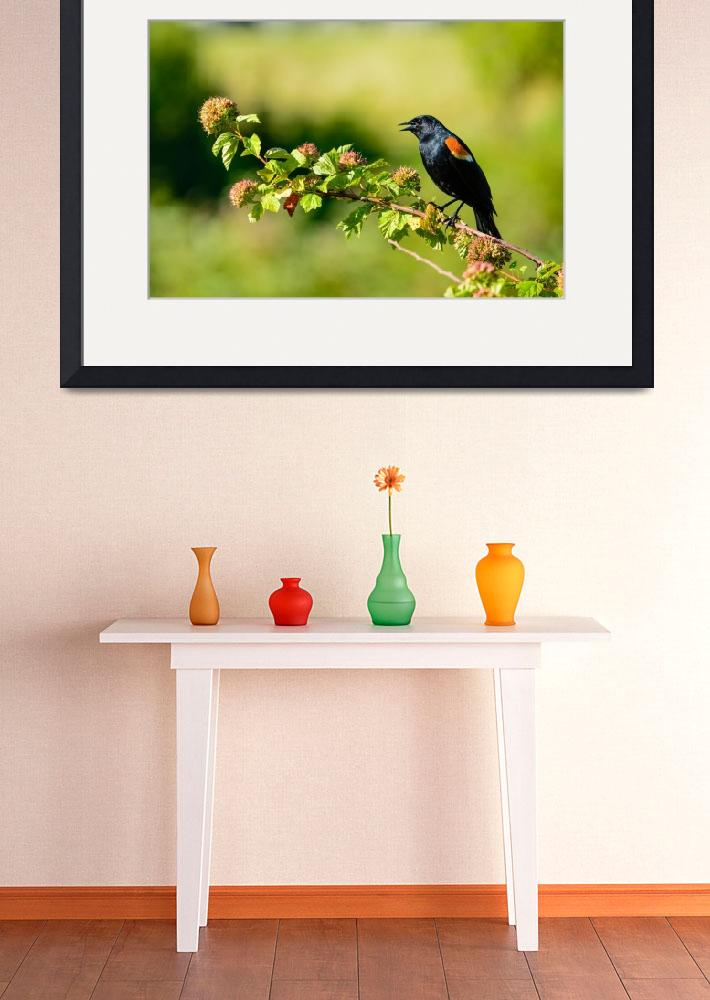 """""""Red-winged Blackbird&quot  (2015) by mcmikephoto"""