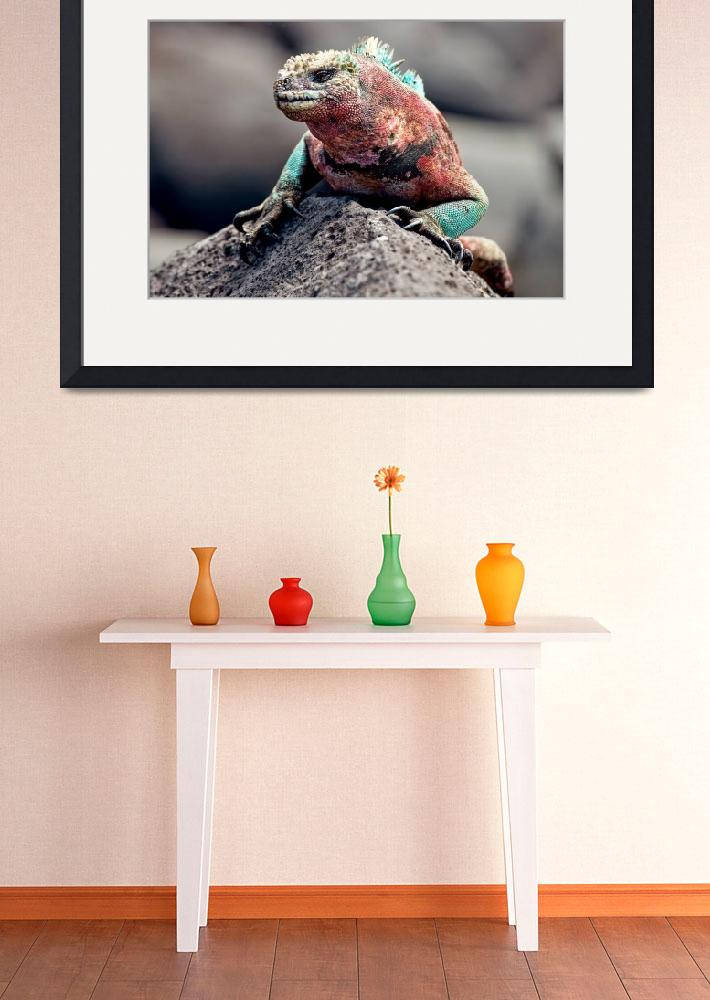 """""""Colorful Marine Iguana - Galapagos&quot  (2009) by BrianLewis"""