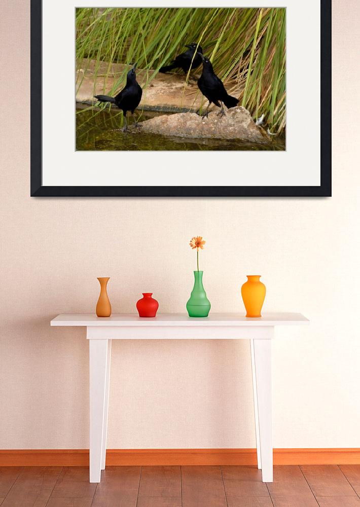 """""""The Three Grackles""""  (2007) by shzimmerman"""