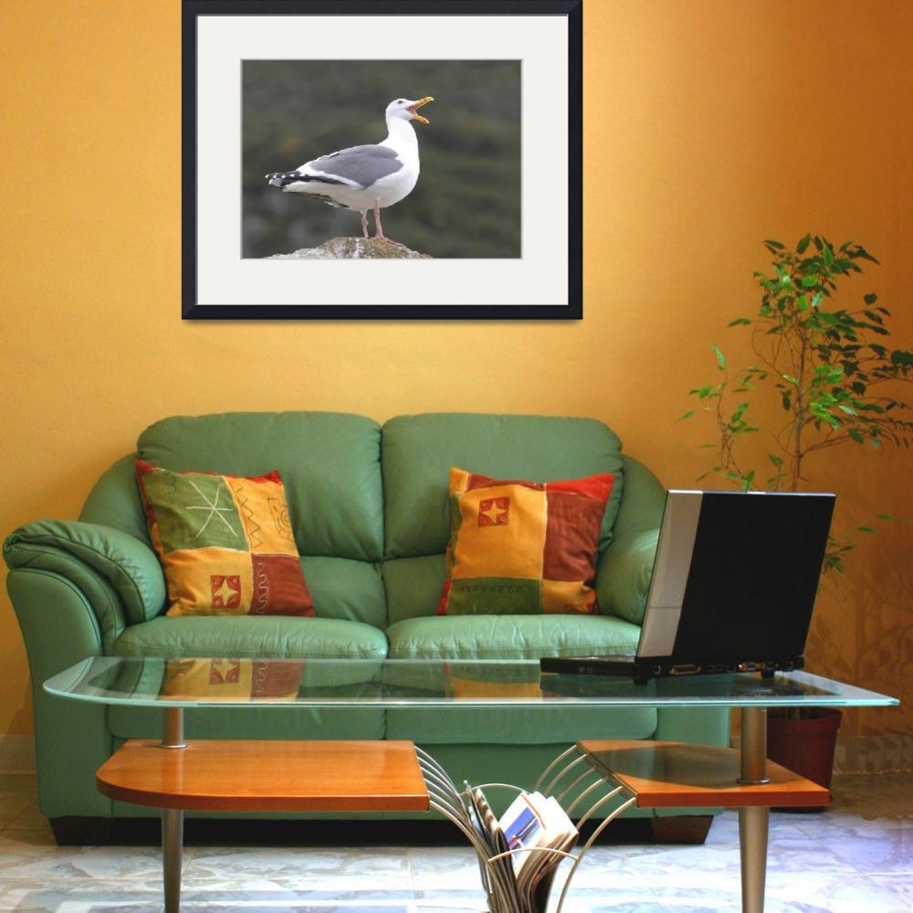 """""""Western Gull Photograph&quot  by ArtLoversOnline"""